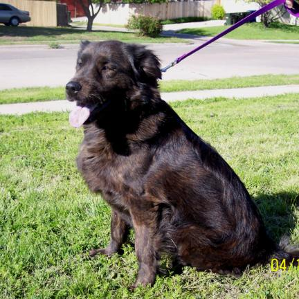Australian Cattle Dog Black Lab And Cats