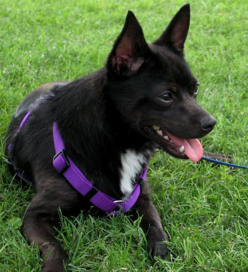 Dog Dallas Adoption