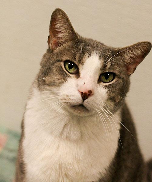 dallas cat friendly vet