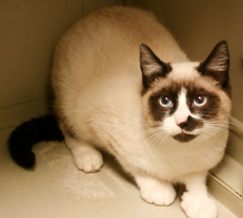 raymond   snowshoe humane society of dallas county