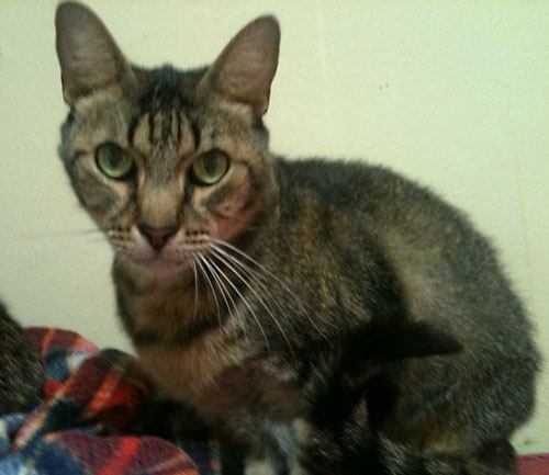 What food should I feed my male cat if I wish to prevent a ...