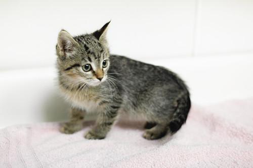 Cats For Adoption Georgia