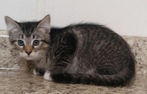 Clay County Humane Society Cats