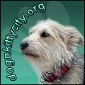 Humane Society of Dallas County - Dog & Kitty City Shelter