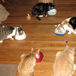 Anniversary party - fancy feast!