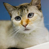 Nadine was adopted in 2008, but once declawed, her new owner didn't like her any more so returned her to the shelter.