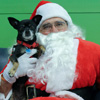 Crimson with Santa Claws