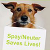 <small>Photo taken from http://www.thepetitionsite.com/1/Dallas-Spay-Neuter.</small>